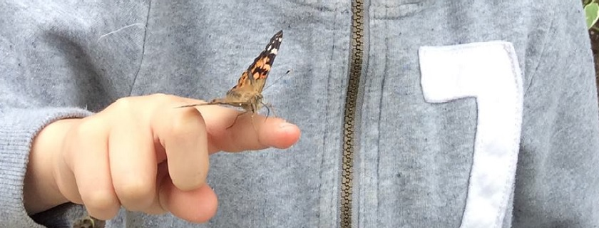 A butterfly on a child's finger.