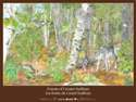 Forests of Greater Sudbury Poster